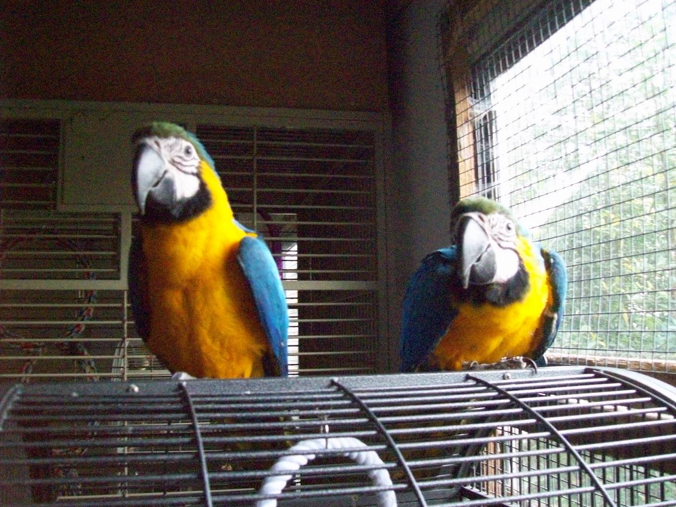 Exotic Birds For Sale >> Home Riverbank Aviaries