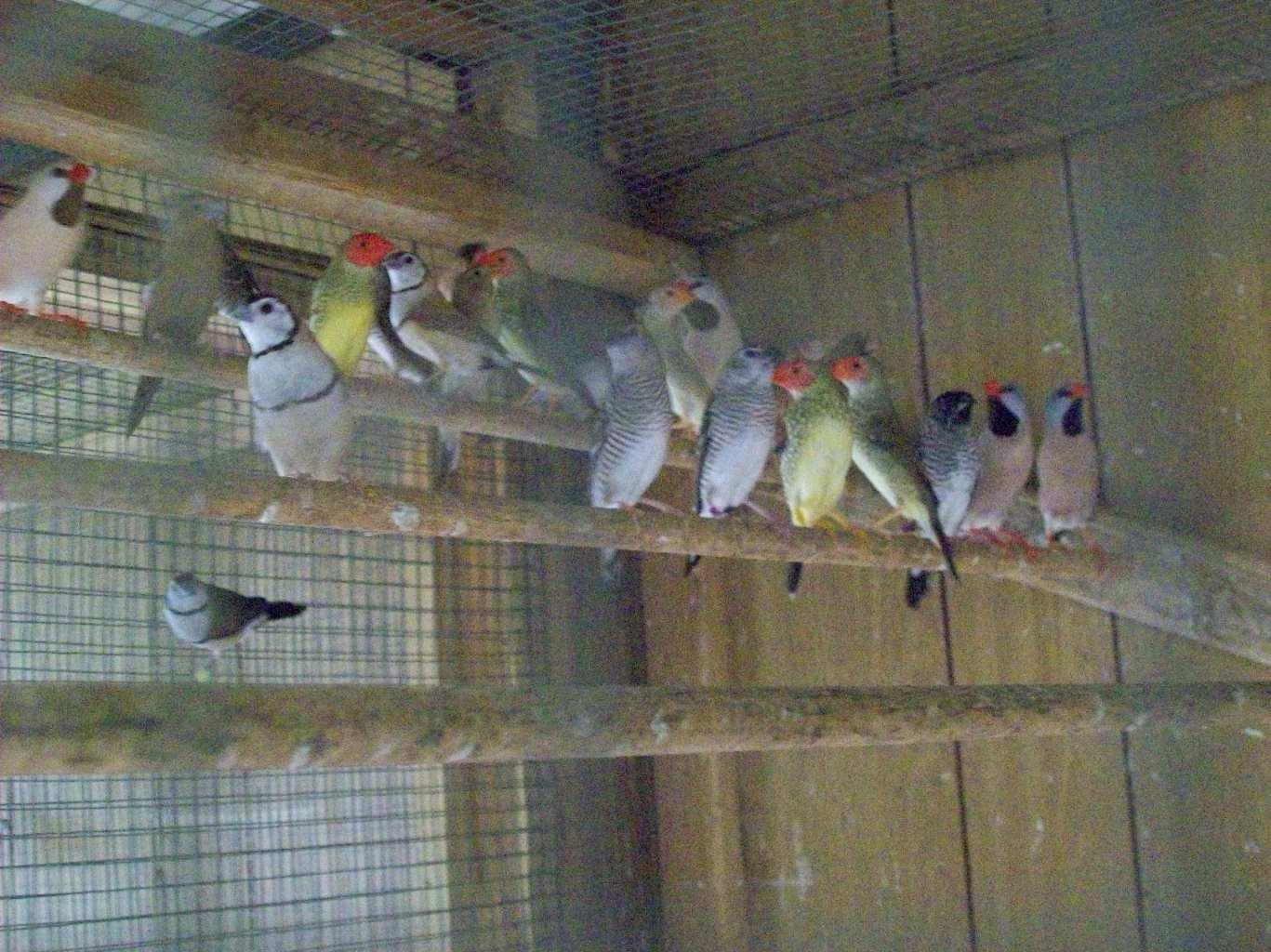 Aviary Birds Riverbank Aviaries